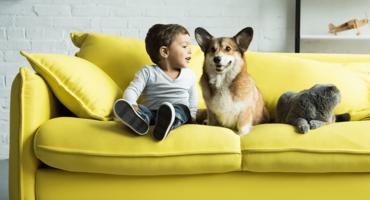 courtier-grossiste-netvox-article-animaux-comportement-tout-comprendre