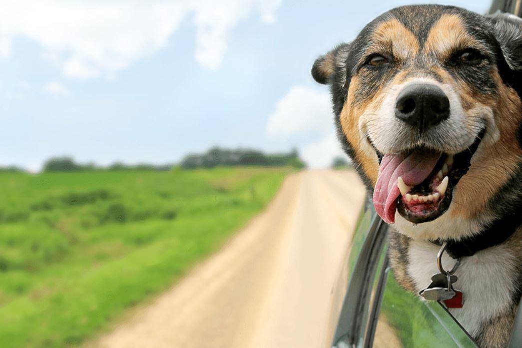 Assurance chiens et chats : notre décryptage complet