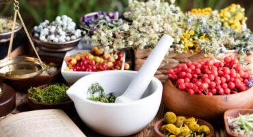 NetVox Assurances - Assurance santé : tous les bienfaits de la phytothérapie